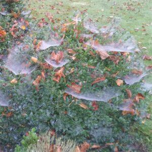 autumn cob webs
