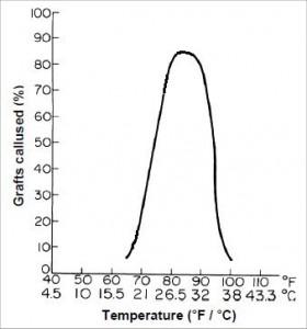 Callus graph