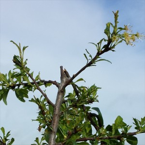 pigeon_damage3_2014-04-26 08.48.41