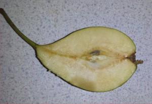 winwick-rh-pear-2014-07-31 17.40.30