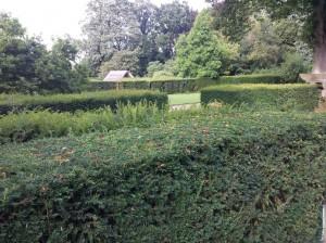 yew-hedge1-2014-08-12 09.20.46
