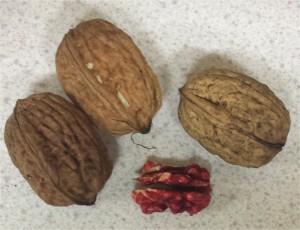 walnut-red-danube-2014-10-14 18.21.19