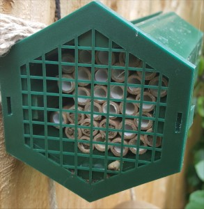 mason-bees-middle-2015-06-28 13.13.25