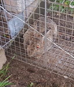 rabbit-2015-07-26 14.41.32