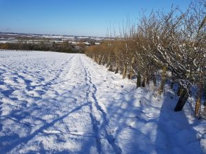 Winter Snow in the Orchard February 2021
